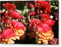Carnival Of Flowers 04 Acrylic Print by Andrea Jean