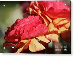 Carnival Of Flowers 05 Acrylic Print by Andrea Jean