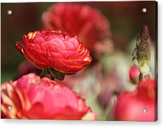 Carnival Of Flowers 06 Acrylic Print by Andrea Jean