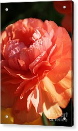 Carnival Of Flowers Acrylic Print by Andrea Jean
