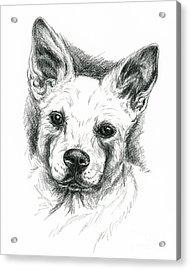 Carolina Dog Charcoal Portrait Acrylic Print