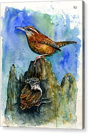 Carolina Wren And Baby Acrylic Print by John D Benson