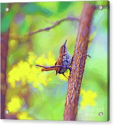 Acrylic Print featuring the photograph Carolina Wren In The Autumn Forest by Kerri Farley