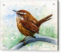 Carolina Wren Large Acrylic Print
