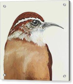 Carolina Wren Acrylic Print