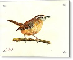 Carolina Wren Watercolor Painting Acrylic Print