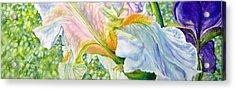 Carols-iris-i Acrylic Print by Nancy Newman