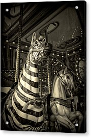 Acrylic Print featuring the photograph Carousel Zebra by Caitlyn Grasso