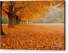 March Of The Maples Acrylic Print