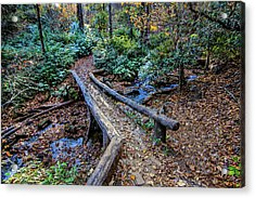 Carpet Of Leaves Acrylic Print by Dale R Carlson