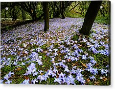 Carpet Of Petals Acrylic Print