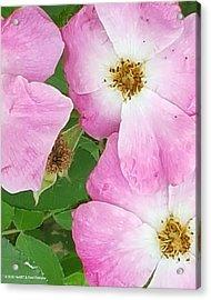 Carpet Of Pink Acrylic Print