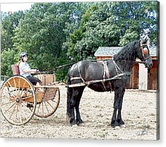Carriage Driving Acrylic Print by David Syers