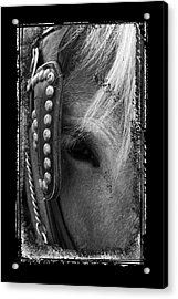 Carriage Horse B And W Acrylic Print