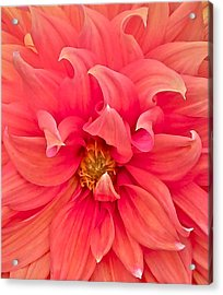 Carrie's Sister Acrylic Print by Gwyn Newcombe