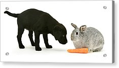 Acrylic Print featuring the photograph Carrots Are For Pups, Too by Warren Photographic