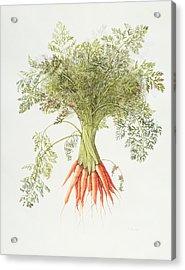 Carrots Acrylic Print by Margaret Ann Eden