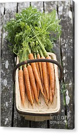 Carrots Acrylic Print by Tim Gainey