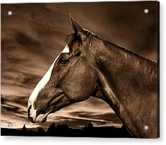 Carsen Sepia Acrylic Print by Irma BACKELANT GALLERIES