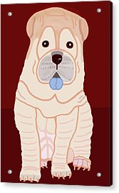 Cartoon Shar Pei Acrylic Print by Marian Cates