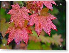 Cascade Autumn Leafs 5 Acrylic Print by Noah Cole