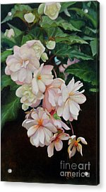 Cascade Of Begonias  Acrylic Print by Margit Sampogna