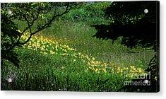 Cascade Of Lillies Acrylic Print by Georgia Sheron
