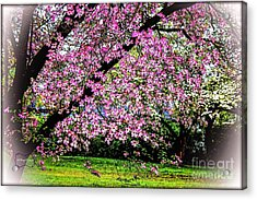 Cascading Dogwood Copyright Mary Lee Parker 17, Acrylic Print
