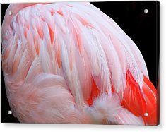 Acrylic Print featuring the photograph Cascading Feathers by Elvira Butler