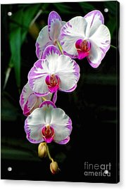 Cascading Orchid Beauties Acrylic Print by Sue Melvin