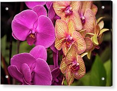 Cascading Orchids Acrylic Print by Penny Lisowski