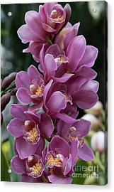 Cascading Orchids Acrylic Print