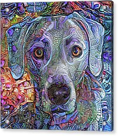Cash The Blue Lacy Dog Closeup Acrylic Print