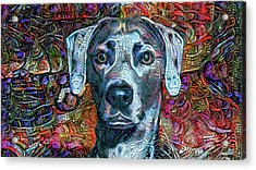Cash The Blue Lacy Dog Acrylic Print
