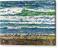 Caspian Terns By The Ocean Acrylic Print