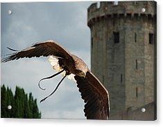 Castle And Eagle Acrylic Print by Irum Iftikhar