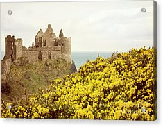 Acrylic Print featuring the photograph Castle Ruins And Yellow Wildflowers Along The Irish Coast by Juli Scalzi