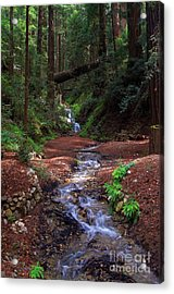 Castro Canyon In Big Sur Acrylic Print