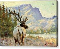 Casual Walk Elk Acrylic Print by Larry Seiler