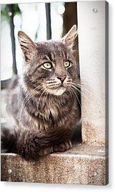Cat #2480 Acrylic Print