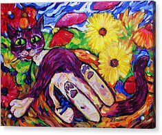Cat Among Daisy Petals Acrylic Print by Dianne  Connolly
