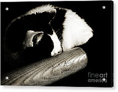Cat And Bat Acrylic Print