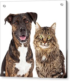 Cat And Dog Closeup Acrylic Print by Susan Schmitz