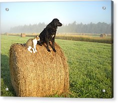 Cat And Dog On Hay Bale Acrylic Print