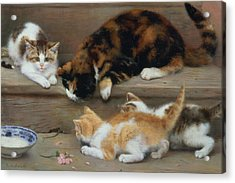 Cat And Kittens Chasing A Mouse   Acrylic Print by Rosa Jameson