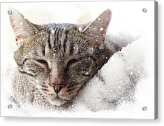 Cat And Snow Acrylic Print