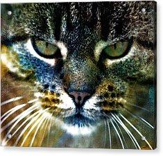 Cat Art Acrylic Print by Frank Tschakert