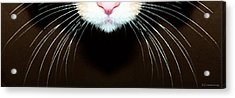 Cat Art - Super Whiskers Acrylic Print by Sharon Cummings