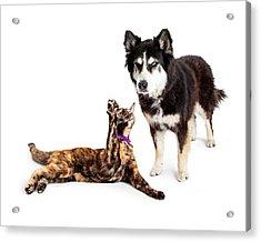 Cat Batting At Angry Dog Acrylic Print