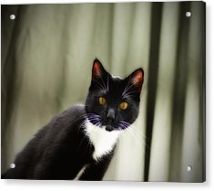 Cat Cat Acrylic Print by Bill Cannon